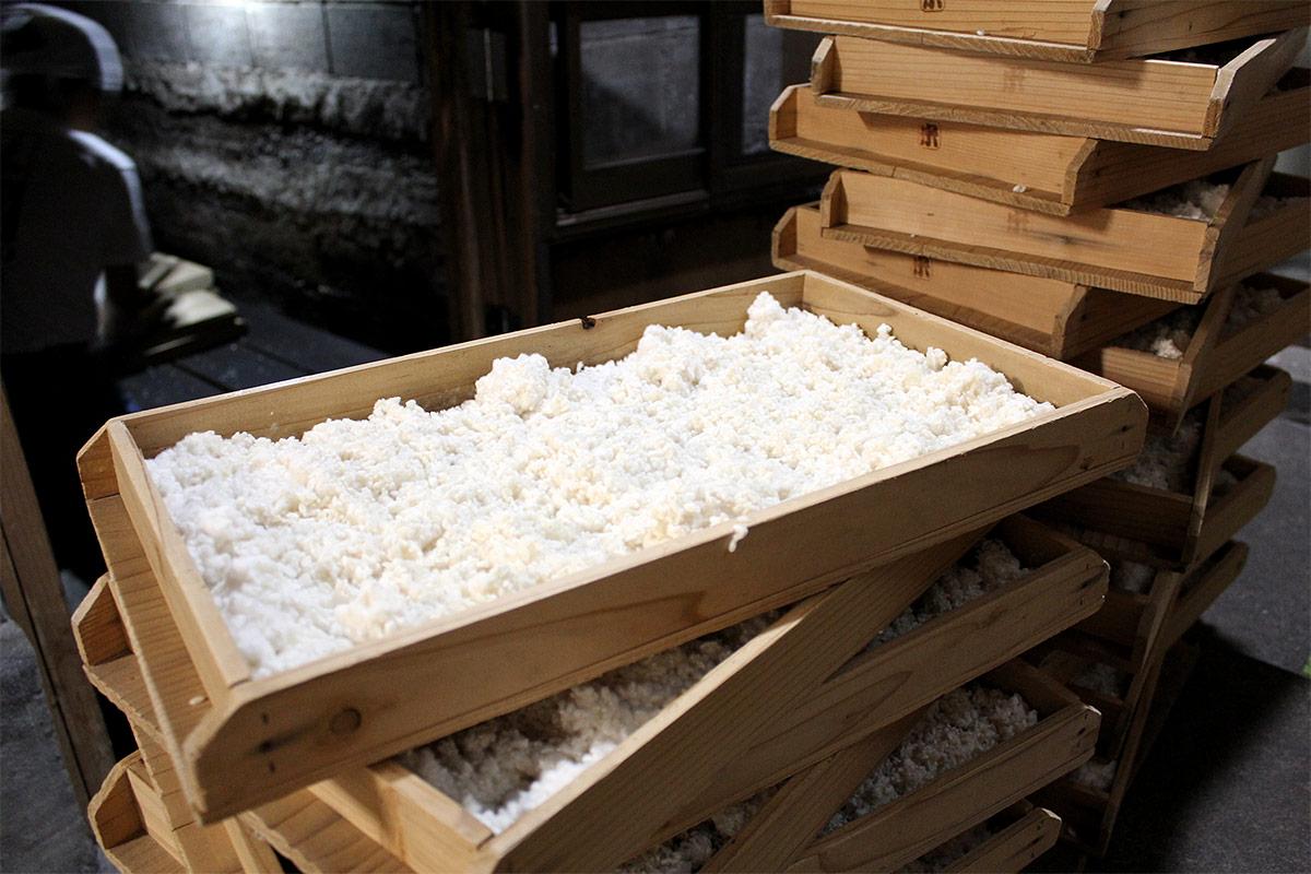麹蓋を使用した長毛菌の麹づくり