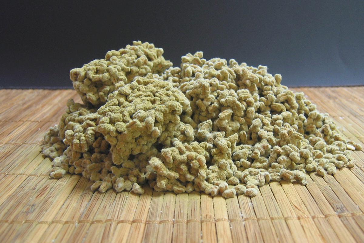 短毛菌の麦麹