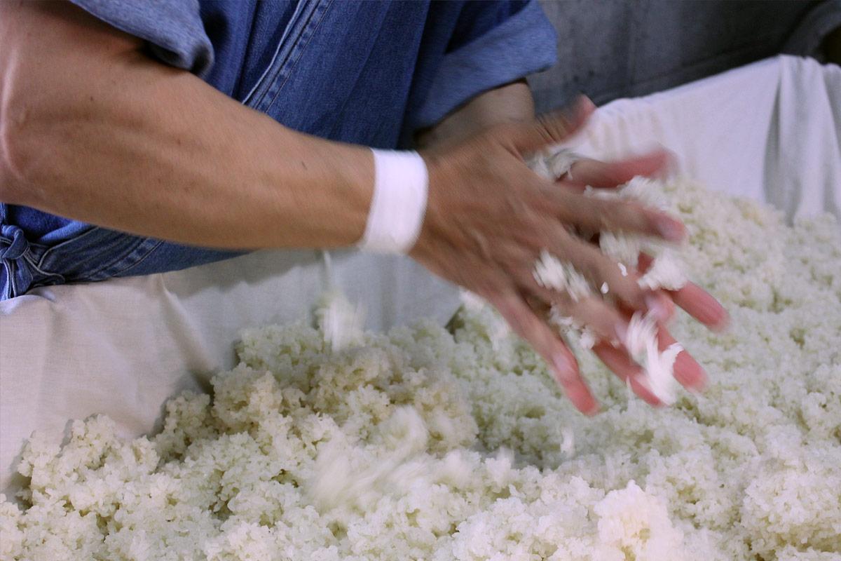 米に麹菌を付ける