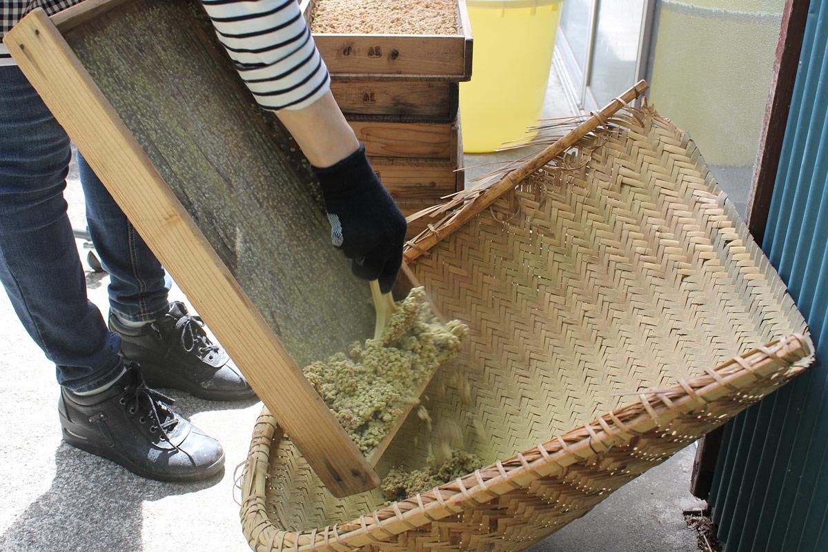 小麦麹をこうじ蓋からはがす