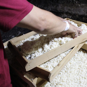 小泉麹屋の麹
